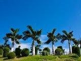 Palmy v parku Suan Buak Haad