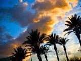 Pohled na palmy a oblohu při západu slunce