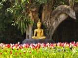 Zlatý buddha pod Stromem osvícení