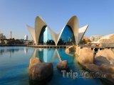 Město umění a věd, oceánografické akvárium