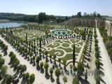 Královská zahrada ve Versailles