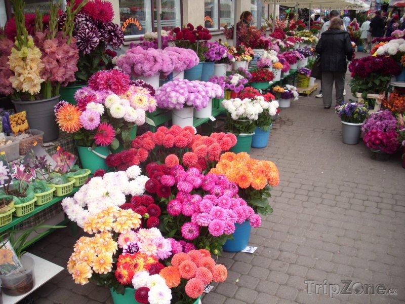 Fotka, Foto Květinový trh
