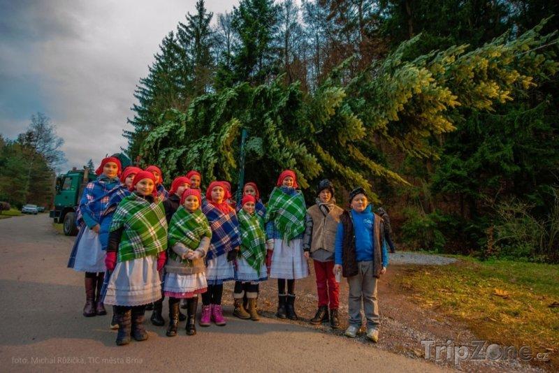 Fotka, Foto Tento strom bude zdobit náměstí Svobody